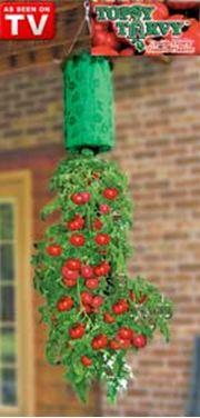 Topsy turvy tomato