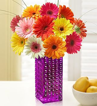 One Dozen Gerbera Daisies with Free Vase