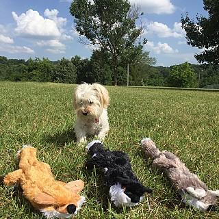 Stuffing free dog toys