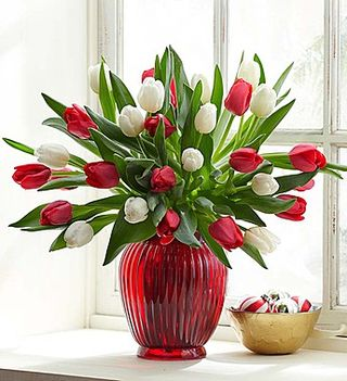 Holiday tulips
