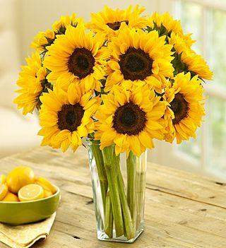 Sunflowers 1800flowers