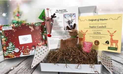 Adopt a reindeer kit